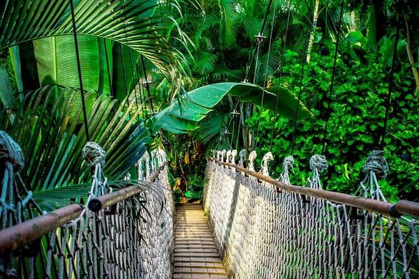 Джунглии Амазонки