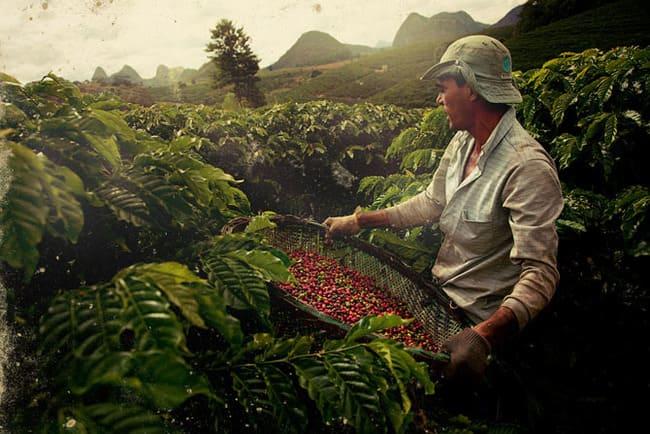 Кофейное хозяйство Бразилии