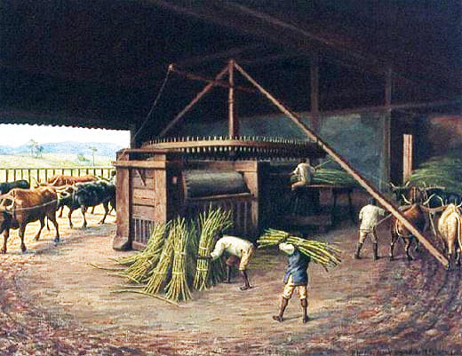 Сахарный тростник в Бразилии